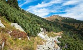 Traccia di montagna immagini stock libere da diritti