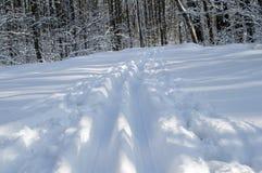 Traccia di sci nella foresta Immagini Stock Libere da Diritti