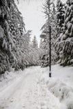 Traccia di Snowy attraverso la traccia di DSnowy tramite le latifoglie con la lampada di via, Whistler, alberi eciduous con la la Immagine Stock