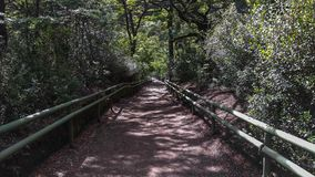 Traccia di trekking in Vicente Perez Rosales National Park, Puerto Varas, Cile fotografia stock
