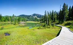 Traccia e prato alpini, parco provinciale di Strathcona, isola di Vancouver, Columbia Britannica, Canada immagini stock libere da diritti