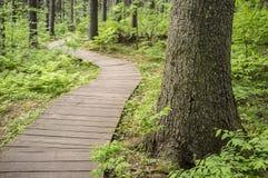 Traccia ecologica fatta delle plance di legno per camminare in foresta, in fotografia stock