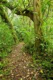 Traccia in foresta Immagini Stock