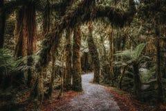 Traccia in foresta tropicale in Nuova Zelanda immagini stock libere da diritti