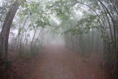 Traccia fra gli alberi nei precedenti della nebbia immagini stock
