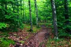Traccia Michigan della regione selvaggia di montagne dell'istrice Fotografia Stock Libera da Diritti