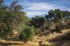 Traccia naturale del sud del canyon di California Immagine Stock Libera da Diritti