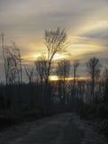 Traccia nella foresta Immagine Stock Libera da Diritti