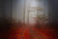 Traccia nella foresta Fotografia Stock