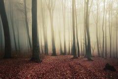 Traccia nella foresta immagini stock