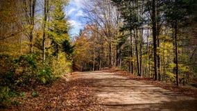 Traccia nella foresta in autunno fotografia stock