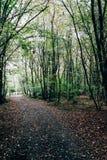 Traccia nella foresta coperta di foglie Immagini Stock