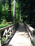 Traccia nella foresta del cedro Fotografia Stock