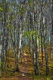 Traccia nella foresta del faggio Immagini Stock Libere da Diritti