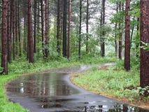 Traccia nella foresta del pino Fotografie Stock Libere da Diritti