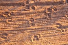 Traccia nella sabbia fotografie stock