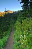 Traccia nelle montagne Fotografie Stock