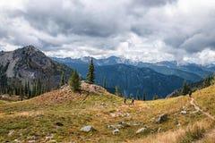 Traccia pacifica della cresta, Washington State fotografie stock
