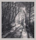 Traccia pacifica della foresta - in bianco e nero Fotografie Stock Libere da Diritti