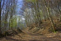Traccia Rheinsteig di Forest Hiking della primavera in Siebengebirge fotografie stock libere da diritti