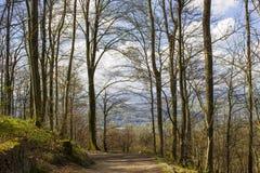 Traccia Rheinsteig di Forest Hiking della primavera in Siebengebirge Germania fotografia stock