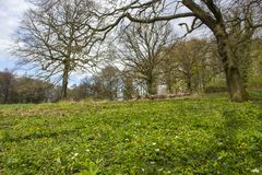 Traccia Rheinsteig, Siebengebirge Germania di Forest Hiking della primavera immagine stock libera da diritti