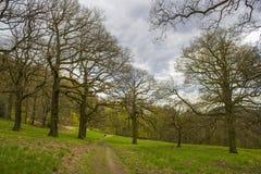 Traccia Rheinsteig, Siebengebirge Germania di Forest Hiking della primavera fotografie stock