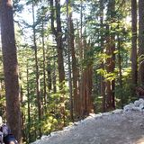 Traccia ripida alla cima del parco provicial di Cypress immagini stock libere da diritti