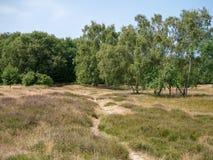 Traccia sabbiosa nella riserva naturale Boberg a Amburgo, Germania prescelto fotografia stock