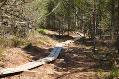 Traccia stretta fatta delle plance che passano la palude di Viru Raba in Estonia nella foresta di conifere Immagine Stock Libera da Diritti