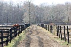 Traccia sull'azienda agricola del cavallo Fotografie Stock
