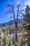 Traccia superiore del ciclo di Bristlecone, Mt Charleston, Nevada immagini stock