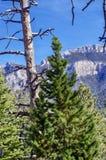 Traccia superiore del ciclo di Bristlecone, Mt Charleston, Nevada immagini stock libere da diritti