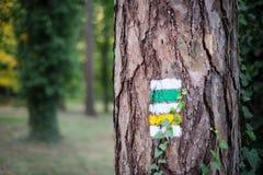 Traccia turistica con il segno giallo ed il segno verde sull'albero Immagine Stock
