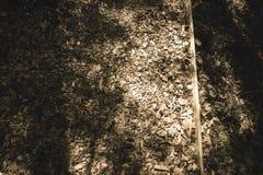 traccia turistica coperta di legno asciutto scheggiato - retro sguardo dell'annata fotografie stock libere da diritti