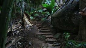 Traccia turistica in Vallée de Mai Nature Reserve video d archivio