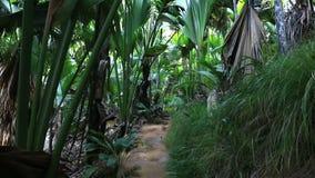 Traccia turistica in Vallee de Mai Nature Reserve stock footage