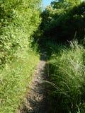 Traccia in un campo ed in una natura verdi Immagine Stock
