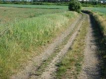 Traccia in un campo ed in una natura verdi Immagine Stock Libera da Diritti