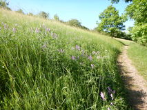 Traccia in un campo ed in una natura verdi Fotografie Stock Libere da Diritti