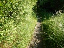 Traccia in un campo ed in una natura verdi Fotografia Stock