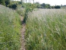 Traccia in un campo ed in una natura verdi Fotografia Stock Libera da Diritti