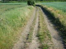 Traccia in un campo ed in una natura verdi Fotografie Stock