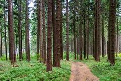 Traccia in una foresta Immagine Stock