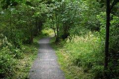traccia verde dei lati di via della natura Immagini Stock Libere da Diritti