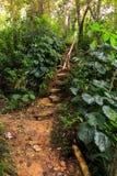 Traccia vicino alle cascate di EL Nicho, Cuba della foresta Fotografie Stock