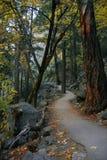 Traccia Yosemite della foresta Fotografia Stock Libera da Diritti