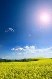 Tracciati di agricoltura di estate Immagini Stock