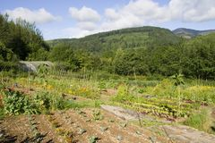 Tracciato di verdure organico Immagine Stock