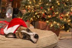 Tracción del árbol de navidad Fotografía de archivo libre de regalías